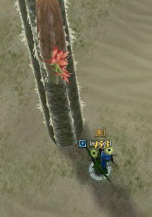 死の砂漠に生きる可憐な花